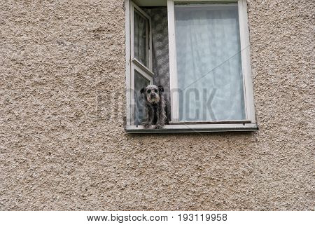 The dog watches from a window of a high-rise apartment building