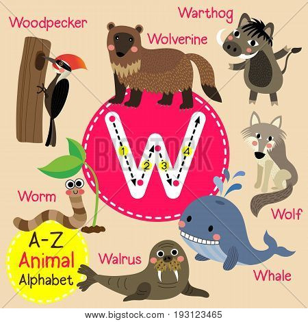 Cute children zoo alphabet W letter tracing of funny animal cartoon for kids learning English vocabulary vector illustration.