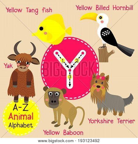 Cute children zoo alphabet Y letter tracing of funny animal cartoon for kids learning English vocabulary vector illustration.