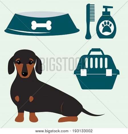 Little dachshund puppy cute brown purebred mammal sweet dog young pedigreed animal breed vector illustration. Funny beauty friend domestic pet.