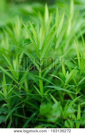 Green Grass Stem Growing Outdoors