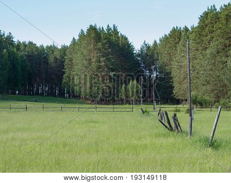 Green meadow with old wooden fence and powerline on a pine forest edge at sunny summer day. Middle Ural Russia