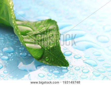 Wet green leaf in drops of water on blue surface macro eco background