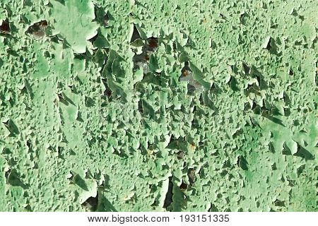 old background of rusty metal painted green .