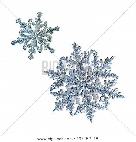 Two snowflakes isolated on white background. Macro photo of real snow crystals: large stellar dendrites with relief surface, fine hexagonal symmetry and long, elegant arms with side branches.
