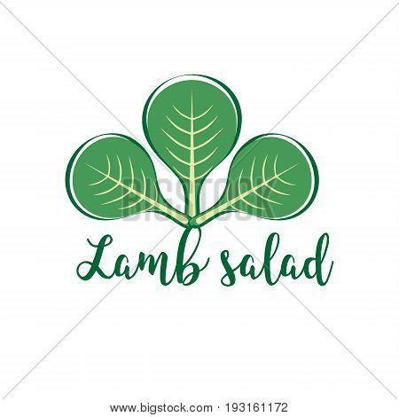 salad plant corn salad mache salad. Horticulture