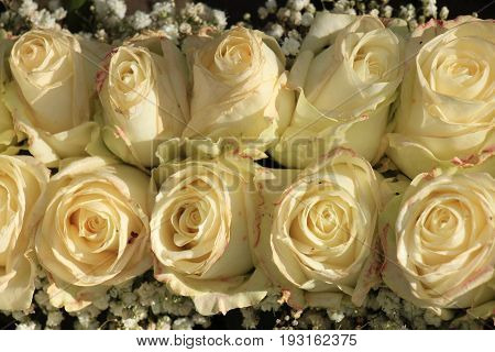 Ivory white roses in a bridal bouquet