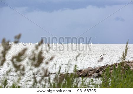 boats with white sails in the sea on the horizon sailboats Gulf of Finland gull bird coast
