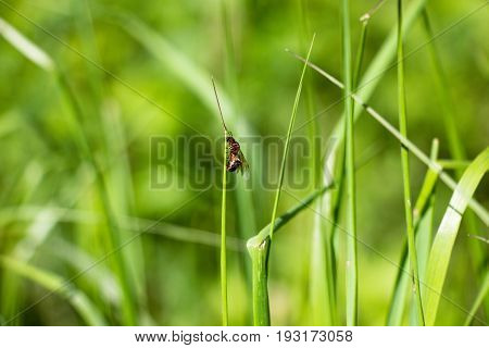The ant with wings sits on the grass. A very ugly insect crawling on the grass then down that up. Very beautiful and fascinating sight.