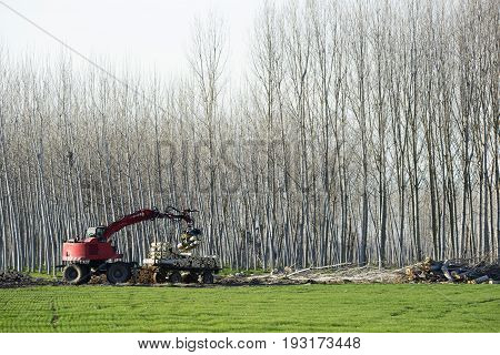 The Harvester Working In A Poplar Forest