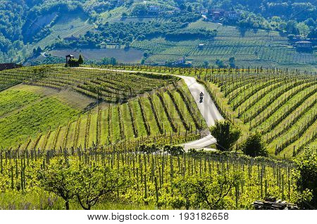 Motorcyclist On The Road Passing Through The Vineyards