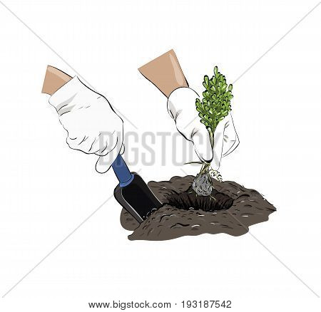 Sketch planting a plant. Vector illustration of plants in the ground.