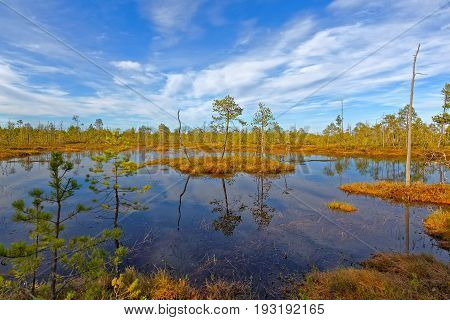 Impassable swamp in the Siberian taiga at sunset