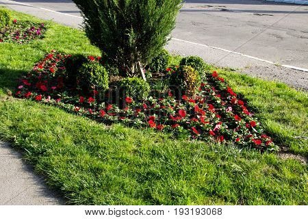 Flowerbed with petunia flowers in city park