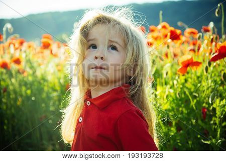 Child Or Little Boy In Field Of Poppy Seed