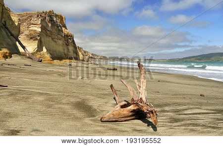 Pacific coast of New Zealand, South Island