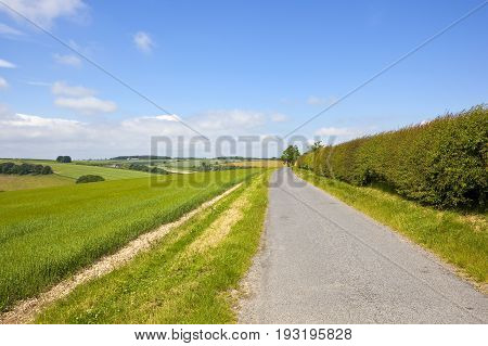 Country Road And Scenery