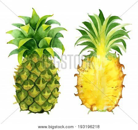 pineapple slice watercolor hand drawn illustration, tropical exotic fruit isolated on the white background