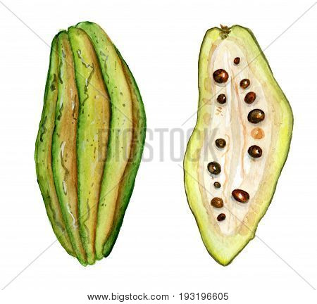 cocoa fruit slice watercolor hand drawn illustration, tropical exotic fruit isolated on the white background