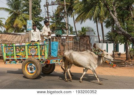 Mysore India - October 27 2013: Two white men on top of colorful wagon pulled by beige buffaloes on rural street through Mellahalli hamlet. Poor housing and palm trees in back.