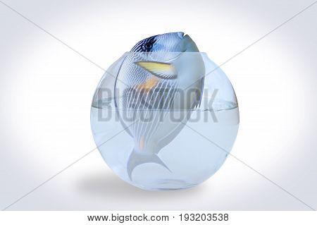 illustration of a big fish with no place to live.