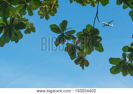 Trees framing an aeroplane flying in a bright blue summer sky. Perfect as a travel image