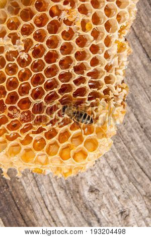 Close Up View Of The Working Bee On The Honeycomb With Sweet Honey.