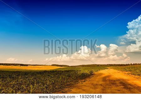 Summer Landscape With Green Corn Cereals Field. Ground Road And Clouds.