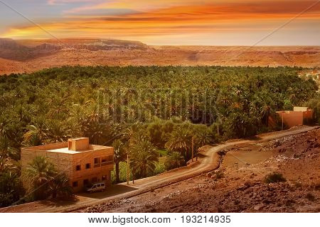Oasis in the desert against the background of the sunset. Africa Morocco.
