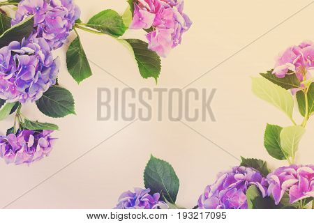 blue and violet hortensia flowers frame on white with copy space, retro toned