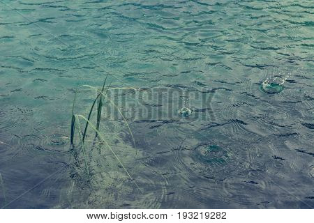 Rain drops on lake surface. Lake Zelenci near Kranjska gora in Slovenia.