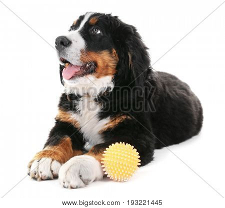 Cute funny dog with rubber ball on white background