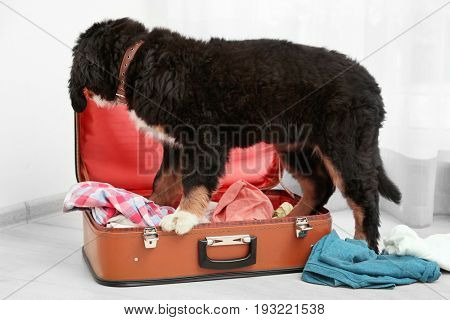 Cute funny dog with open suitcase at home