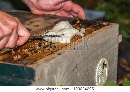 beekeeper provides bees of sucrose between bee frames in hive