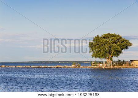 Beautiful tree on lake Ontario. Rochester USA