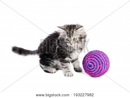 Beautiful gray kitten playing with pink boll