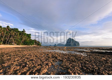 EL NIDO, PALAWAN, PHILIPPINES - MARCH 29, 2017: Wide angle view of a lonely dog walking on the rocks of Las Cabanas beach.