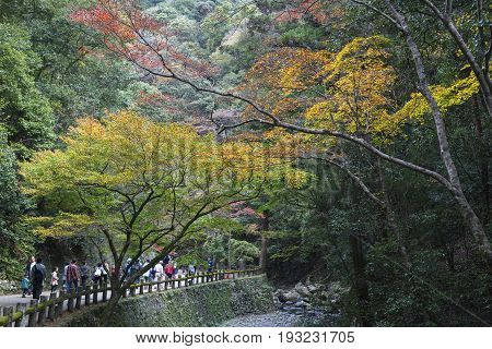 OSAKA JAPAN -NOV 21 2015: Tourists walking on trails to Minoh waterfall in Osaka Japan. Minoh waterfall is one of the best places in Osaka to see the autumn colors in a natural setting