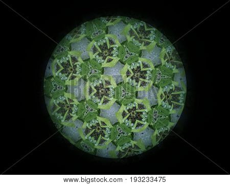 A small garden of flowering plants photographed through a large kaleidoscope resulted in this colorful image.