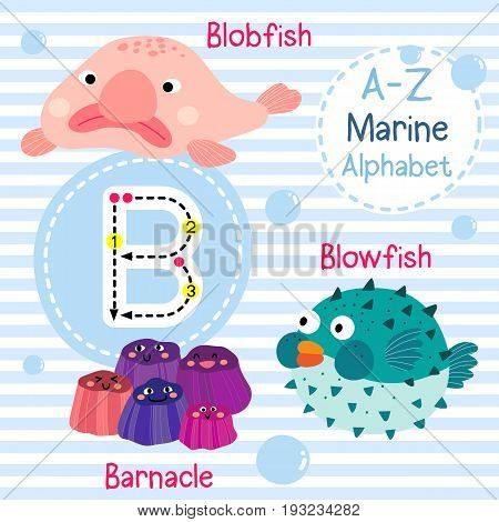 Cute children sea alphabet flashcard of funny marine animal cartoon B letter tracing for kids learning English vocabulary vector illustration.