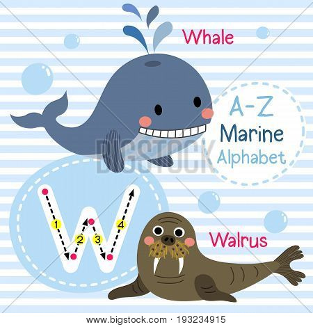 Cute children sea alphabet flashcard of funny marine animal cartoon W letter tracing for kids learning English vocabulary vector illustration.