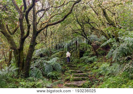 Man trekking in the subtropical forest of the Yangmingshan National Park, Taipei, Taiwan