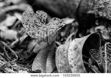 Hollow leaves at the Tambopata Reserve, Peru