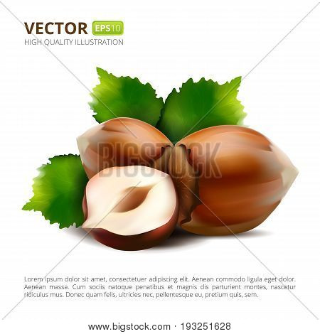 Vector hazelnuts with leaves isolated on white background. Realistic vector illustration.