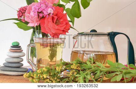 Agrostemma githago Corn-cockle tea & herbal tea