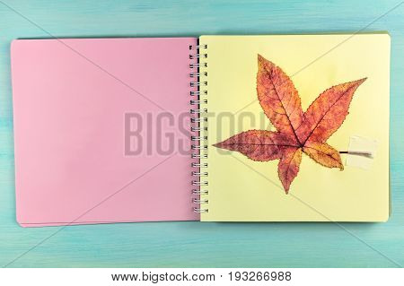 An overhead photo of a herbarium, a spiral notebook with a taped autumn maple leaf, on a teal background, with a place for text
