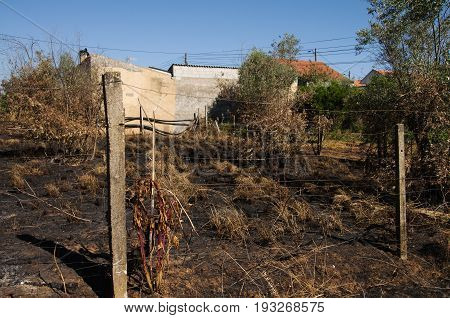 Forest Fire Burnt Ground Up To Small Village Homes - Pedrogao Grande