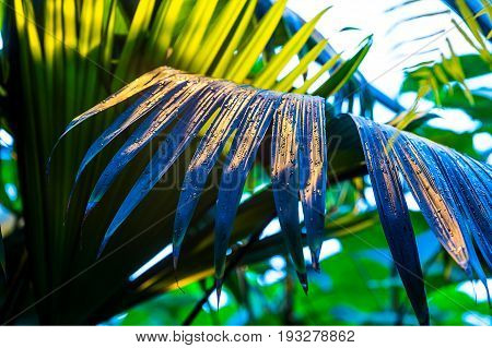 Tropical jungle Fern leaf with water drops close-up