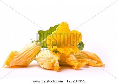 Zucchini's Flowers On White