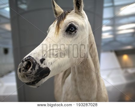 GERMANY - May 31 2012: effigy of a horse on an entrance to the Mercedes museum in Germany Stuttgart